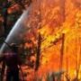 gaisras miškuose